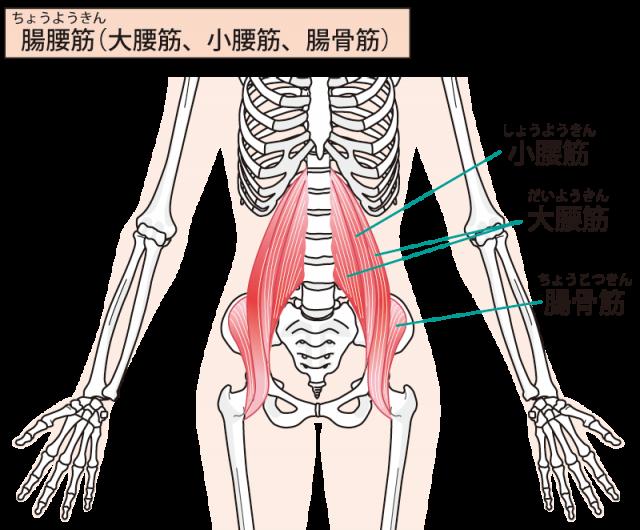下肢の画像