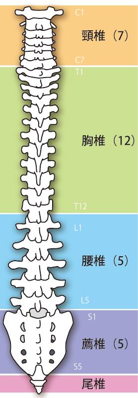 腰椎椎間板ヘルニアへの当院のアプローチとは?