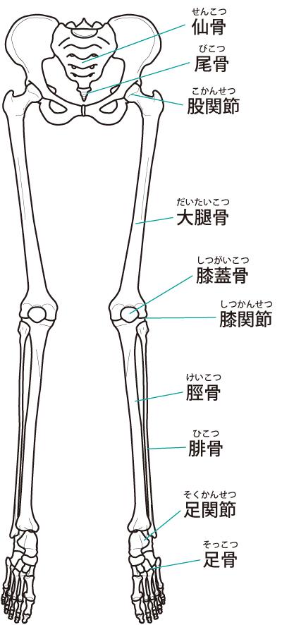 股関節の痛みの原因はバランスの悪さとインナーマッスルの低下です。